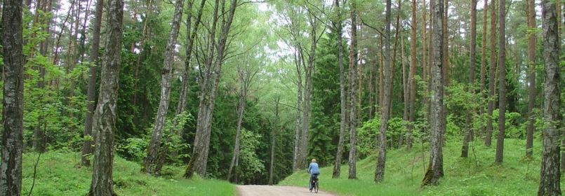 Cycling Holiday in Lithuania - Bicycle Route through Forest