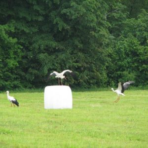 Cycling Holiday in Lithuania - Nemunas River Delta Storks