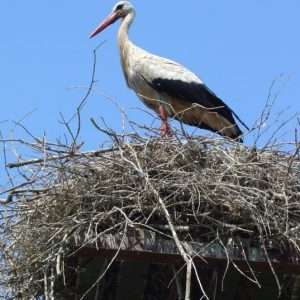 Cycling Holiday in Lithuania - Nemunas River Delta Storks Nest