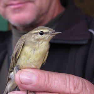 Cycling Holiday in Lithuania - Vente Cape Bird Ringing
