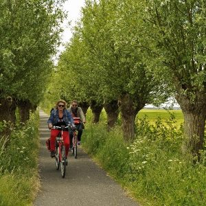Boat & Bike Tour of Northern Holland - Tree-Lined Cycle Path