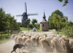 Belgium: Cycling Holiday in Bruges (4 or 5 Nights)