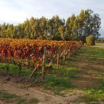 Tandem Bike Tour of Sardinia - Autumn Grapevines (in Winter!)